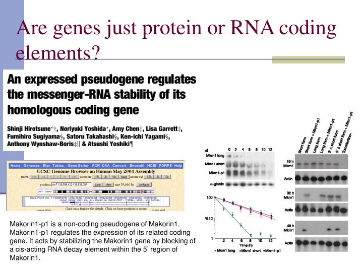 Are genes just protein or RNA coding elements?