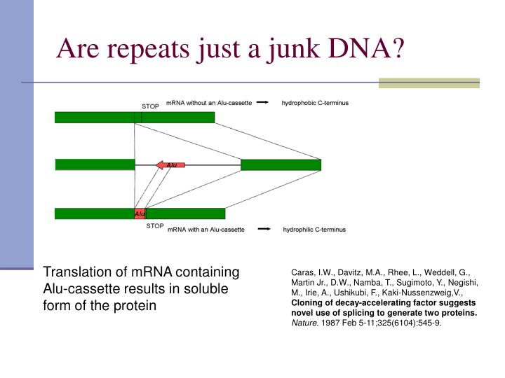 Are repeats just a junk DNA?