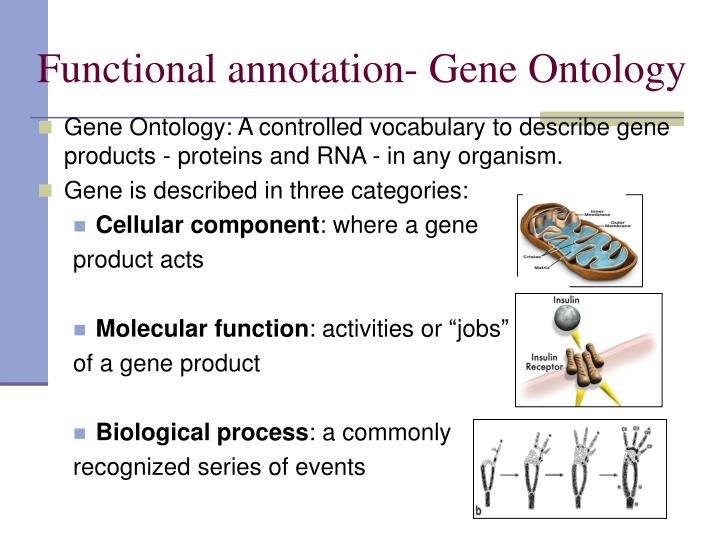 Functional annotation- Gene Ontology