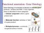 functional annotation gene ontology