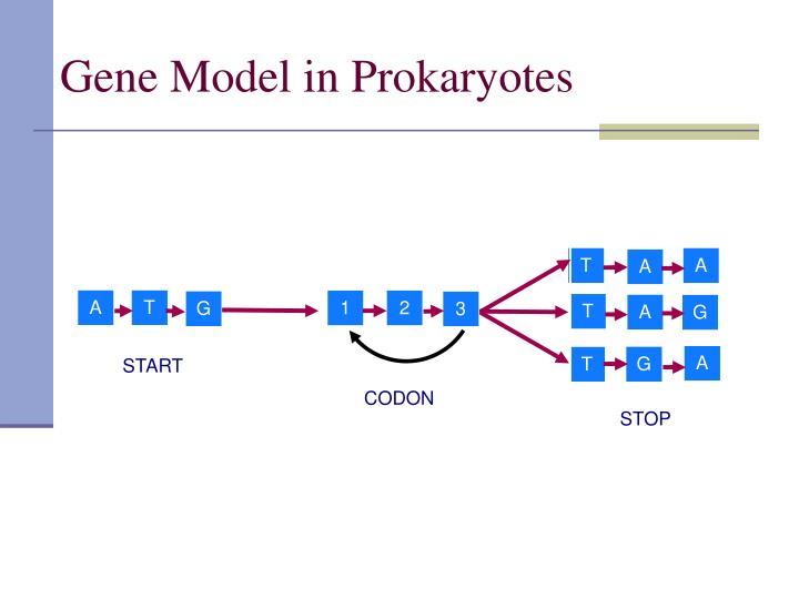 Gene Model in Prokaryotes