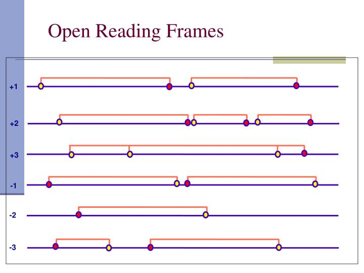 Open Reading Frames