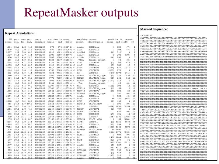 RepeatMasker outputs