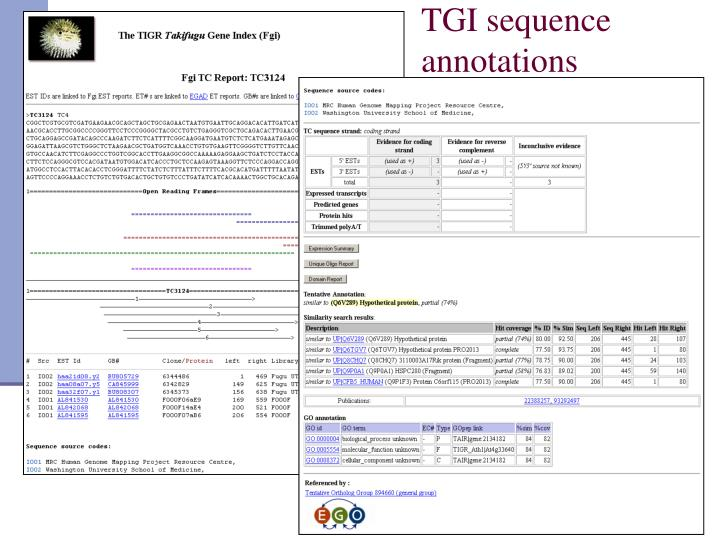 TGI sequence
