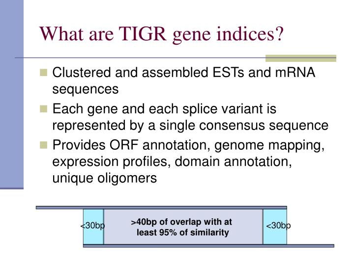What are TIGR gene indices?