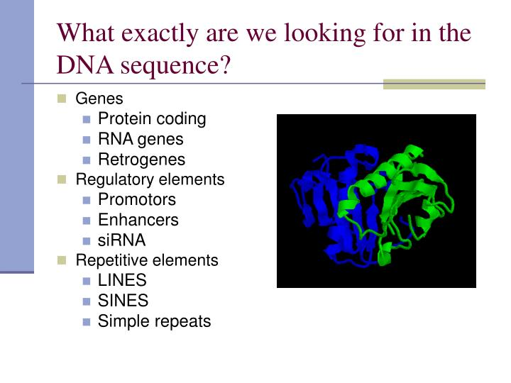 What exactly are we looking for in the DNA sequence?
