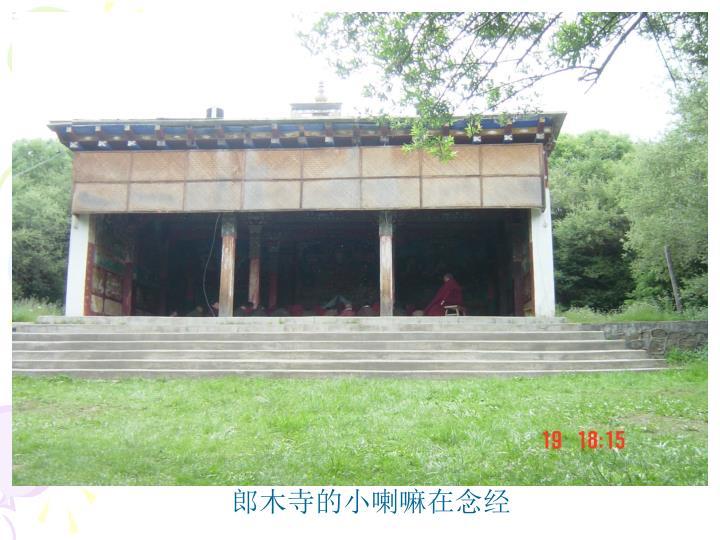 郎木寺的小喇嘛在念经