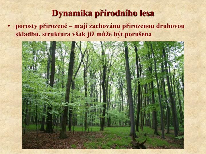 Dynamika přírodního lesa