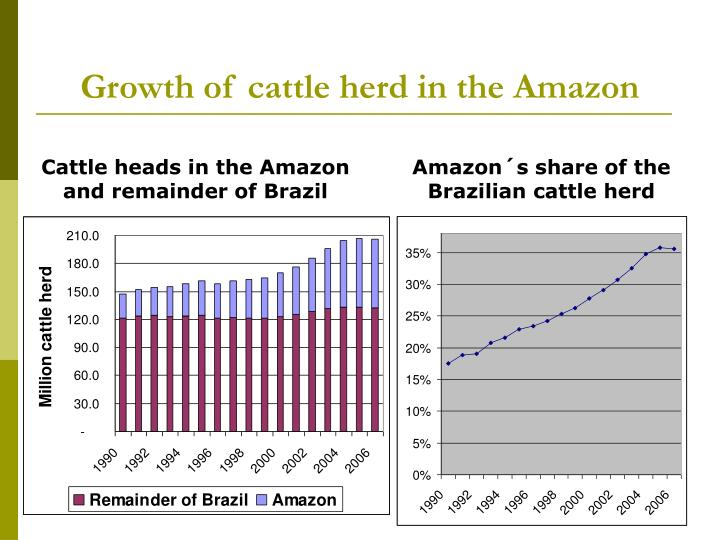 Growth of cattle herd in the Amazon