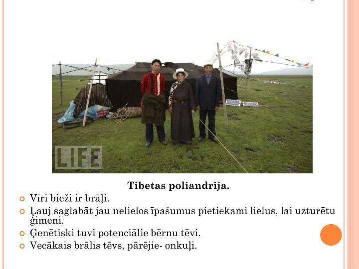 Tibetas poliandrija.