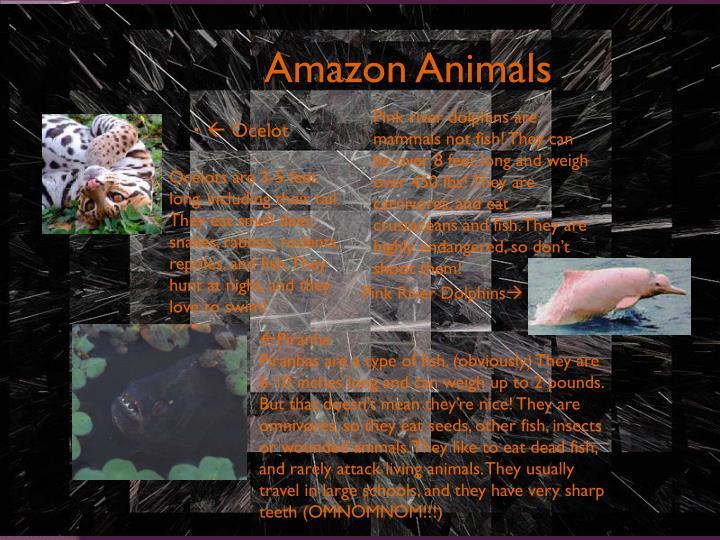 Amazon Animals
