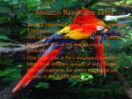 amazon rainforest facts1