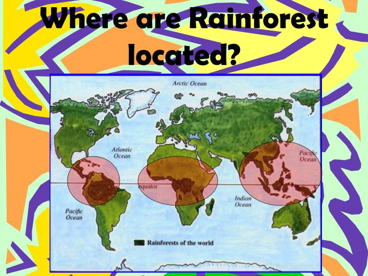 Where are rainforest located