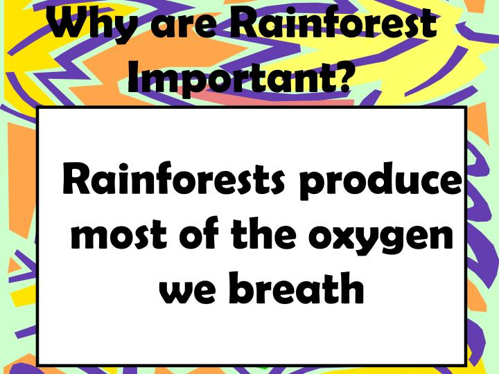 Why are Rainforest Important?
