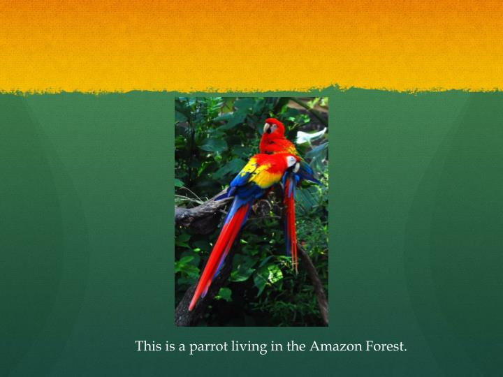 This is a parrot living in the Amazon Forest.