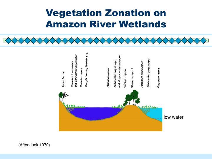 Vegetation Zonation on