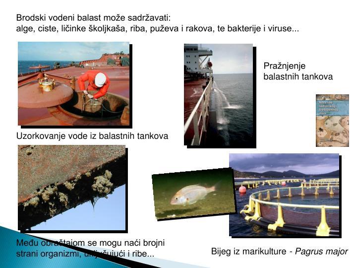 Brodski vodeni balast može sadržavati: