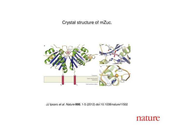 Crystal structure of mZuc.
