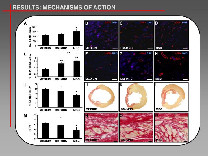 RESULTS: MECHANISMS OF ACTION