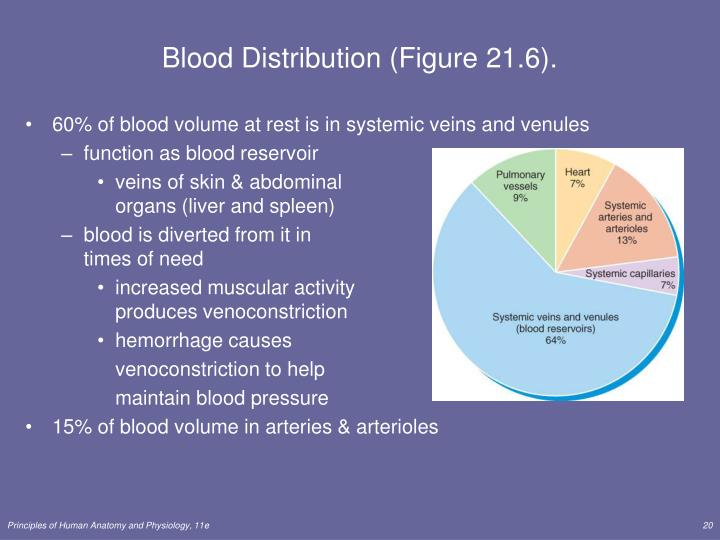 Blood Distribution (Figure 21.6).
