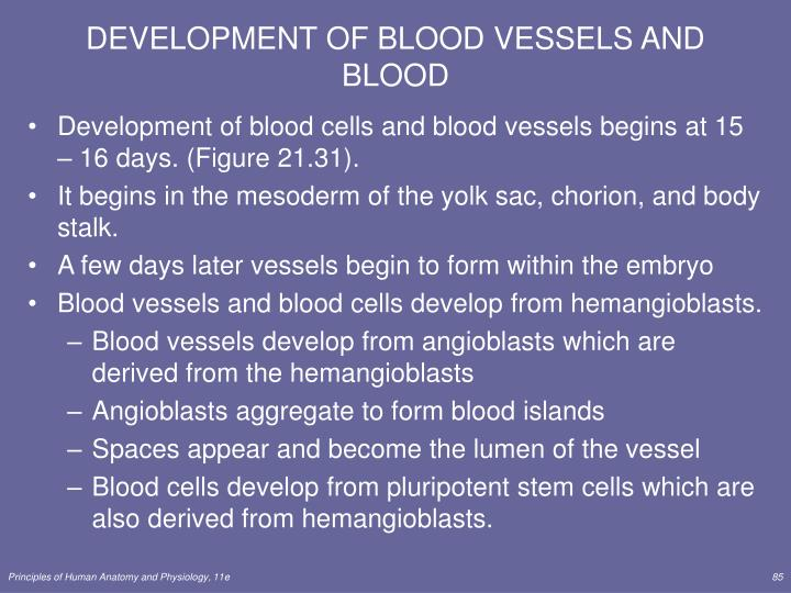 DEVELOPMENT OF BLOOD VESSELS AND BLOOD