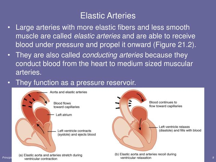 Elastic Arteries