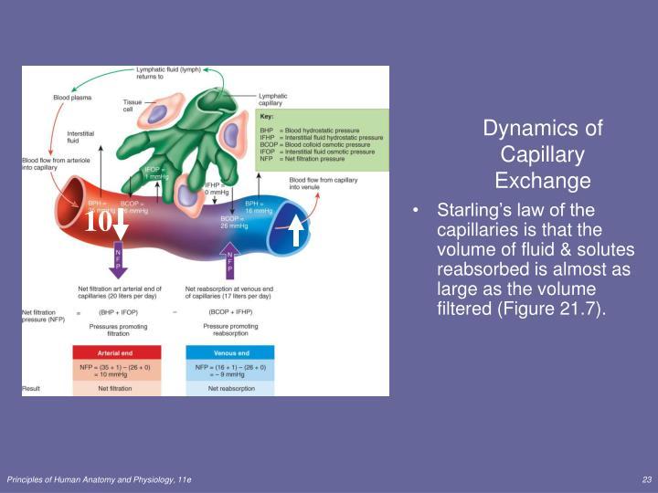 Dynamics of Capillary Exchange