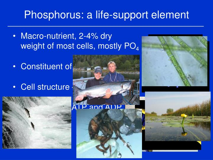 Phosphorus a life support element