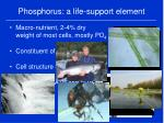 phosphorus a life support element