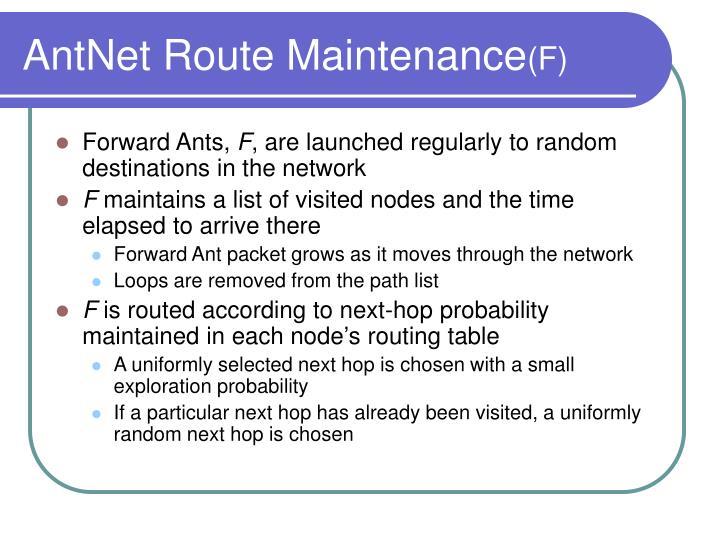AntNet Route Maintenance