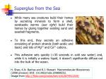 superglue from the sea1