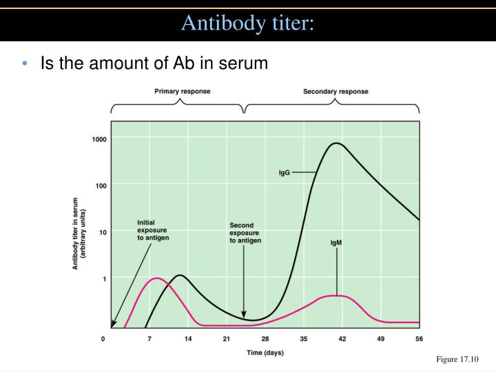Antibody titer: