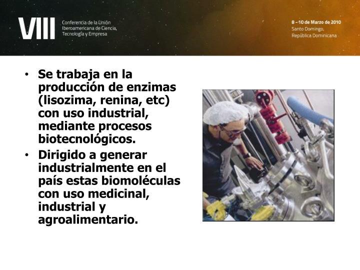 Se trabaja en la producción de enzimas (lisozima, renina, etc) con uso industrial, mediante procesos biotecnológicos.