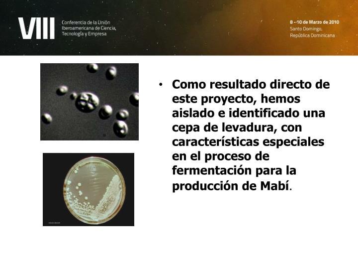 Como resultado directo de este proyecto, hemos aislado e identificado una cepa de levadura, con características especiales en el proceso de fermentación para la producción de Mabí