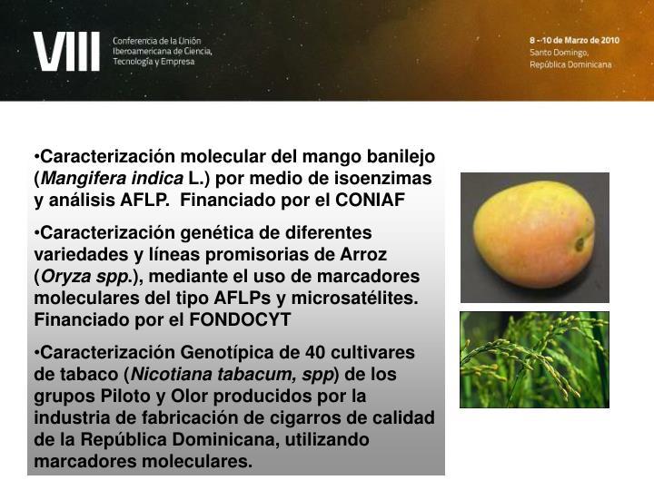 Caracterización molecular del mango banilejo (