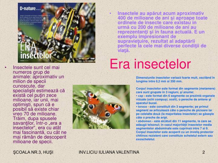 Insectele sunt cel mai numeros grup de animale: aproximativ un milion de specii cunoscute, dar speciali