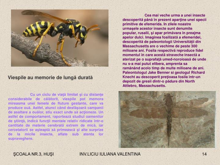 Cea mai veche urma a unei insecte descoperit