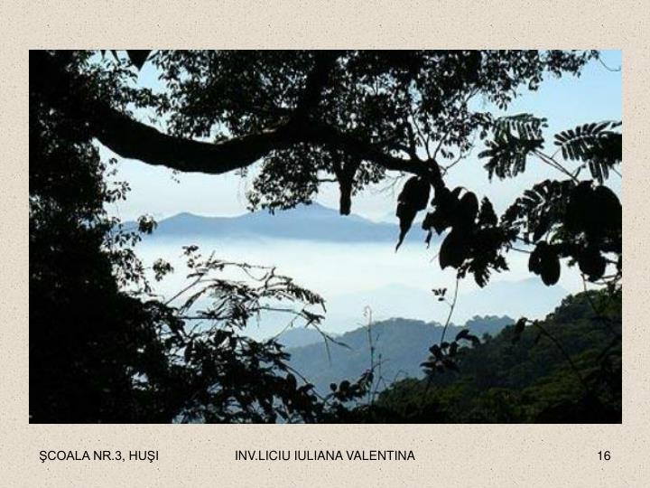 INV.LICIU IULIANA VALENTINA