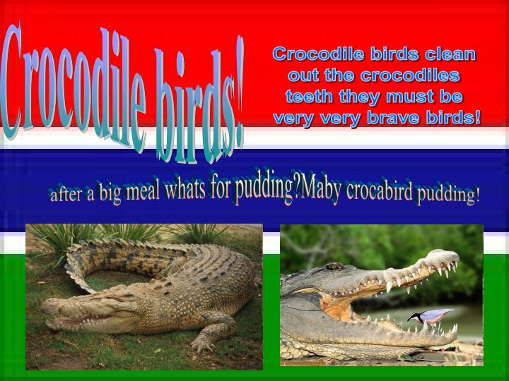 Crocodile birds clean