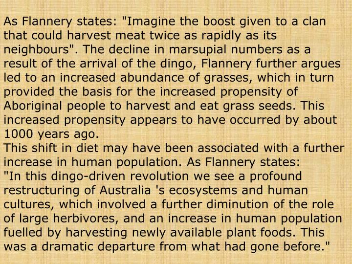 "As Flannery states: ""Imagine the boost given to a clan that could harvest meat twice as rapidly as its neighbours"". The decline in marsupial numbers as a result of the arrival of the dingo, Flannery further argues led to an increased abundance of grasses, which in turn provided the basis for the increased propensity of Aboriginal people to harvest and eat grass seeds. This increased propensity appears to have occurred by about 1000 years ago."