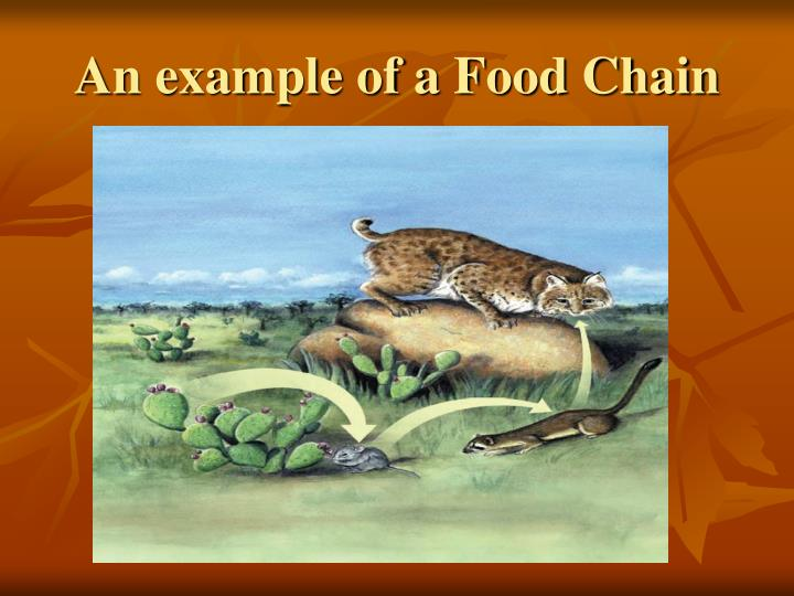 An example of a Food Chain