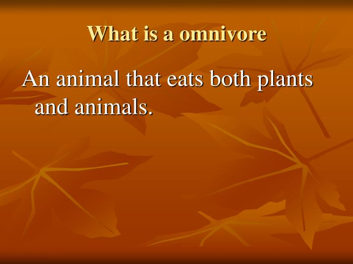 What is a omnivore
