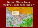 barmah millewa forest wetlands yorta yorta territory