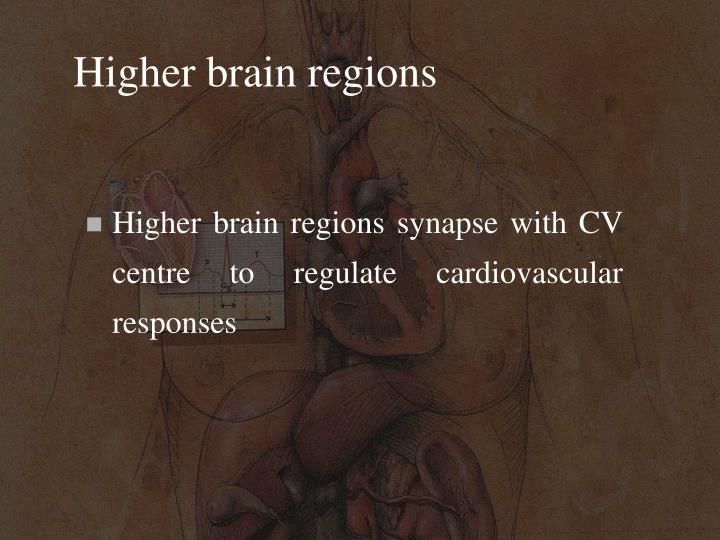 Higher brain regions