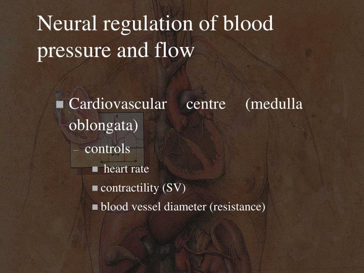 Neural regulation of blood pressure and flow