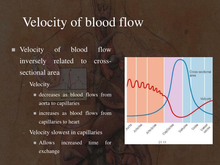 Velocity of blood flow