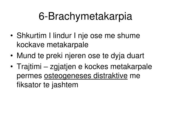 6-Brachymetakarpia