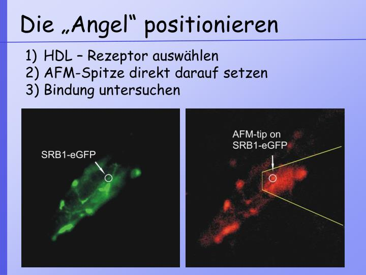 "Die ""Angel"" positionieren"