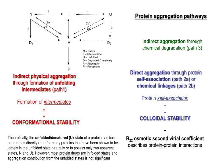 Protein aggregation pathways