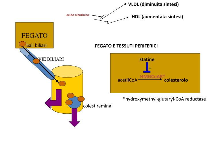 VLDL (diminuita sintesi)